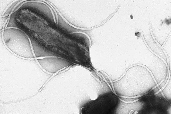 pylor,ピロリ菌の正体