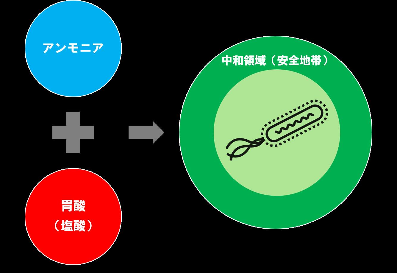 ピロリ菌はアンモニアを中和して胃にすみつく